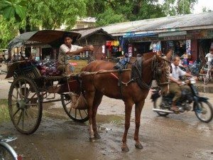 Asiac Again horse cart