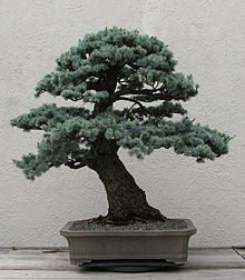 National -Bonsai -Foundation
