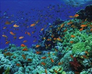 Coral reef Ras Mohamed
